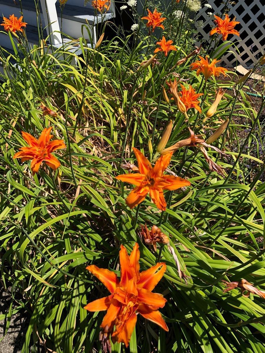 Flowers - 3.jpg