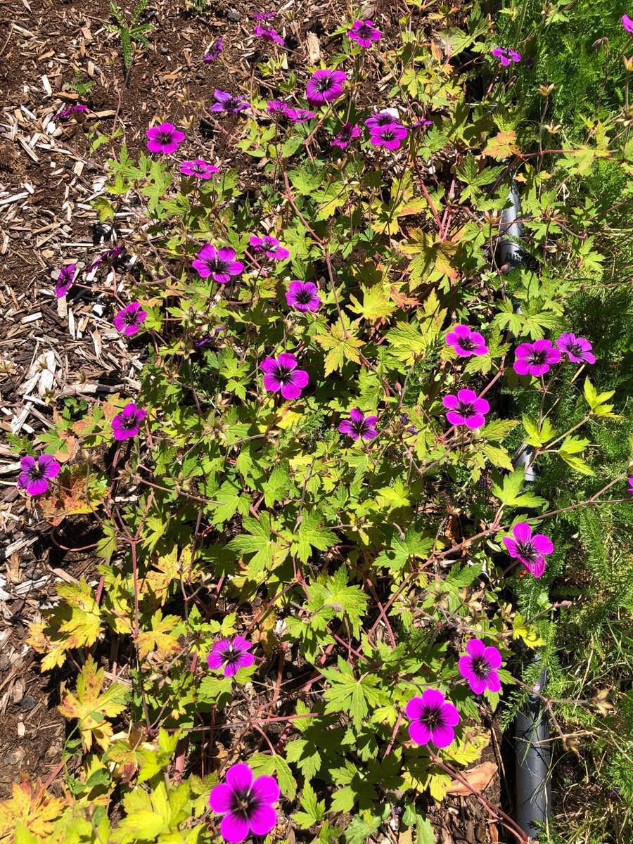 Flowers - 9.jpg