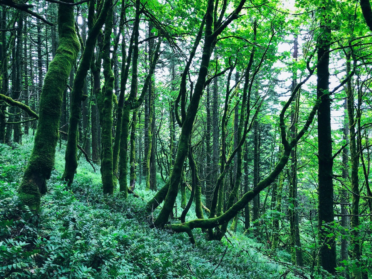 Mossy, dreamy forest